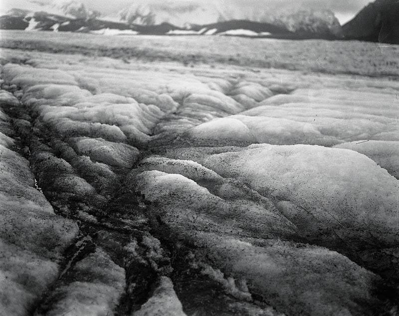 """""""Salix Polaris"""", Anka Sielska, fot. dzięki uprzejmości artystki"""