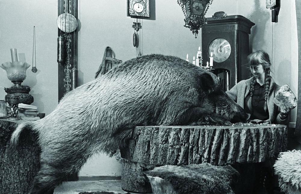 Совместная трапеза в обществе необычного домочадца, Симона с кабанихой Жабкой. Фото : Лех Вильчек