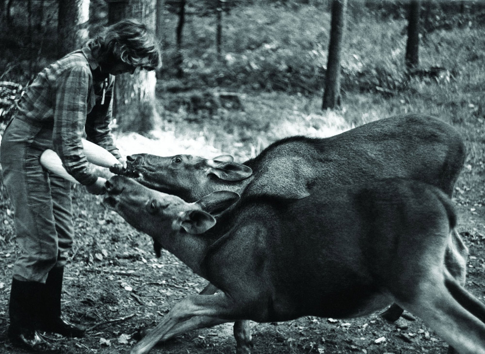 Dla zwierząt była jak matka. Na zdjęciu z łosiami bliźniakami, które Kossakówna nazywała Cola i Pepsi, fot. Lech Wilczek