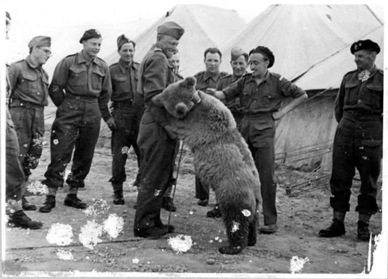 Wojtek, the soldier bear playing with his brothers-in-arms, circa 1942, photo: AA's archive.