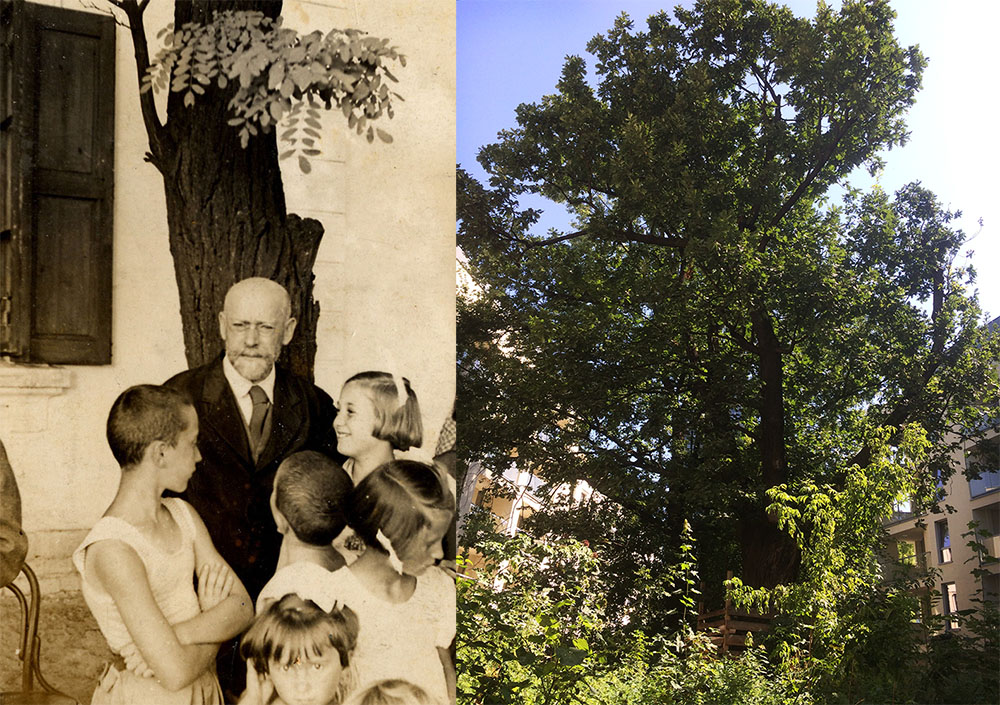 Janusz Korczak with his pupils, The Różyczka Orphanage, 1938, photo courtesy of the Korczakianum Centre for Documentation and Research in Warsaw. The Dr Korczak Oak, photo: Dagmara Smolna