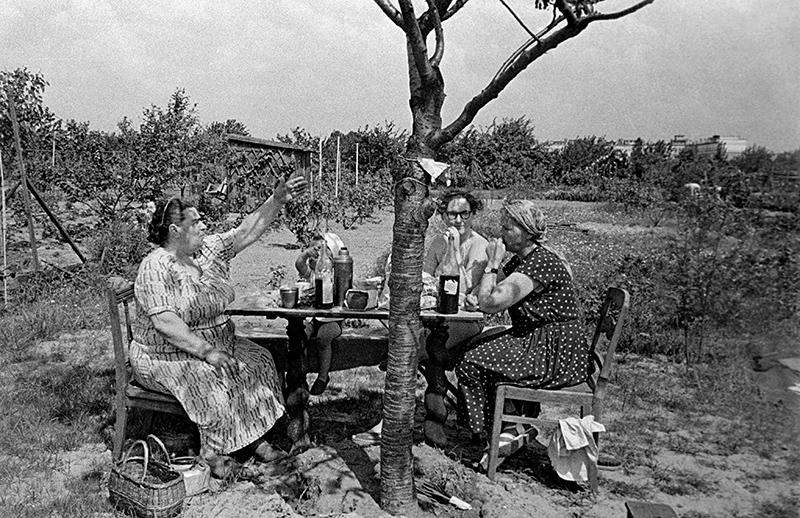 Ogródki działkowe, Sady żoliborskie, Warszawa, 1959, fot. Eustachy Kossakowski / Forum