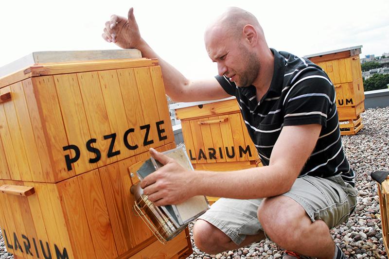 Pszczelarz Kamil i pszczoły w ulach na dachu budynku Agory, Warszawa, fot.  Przemek Wierzchowski / Agencja Gazeta