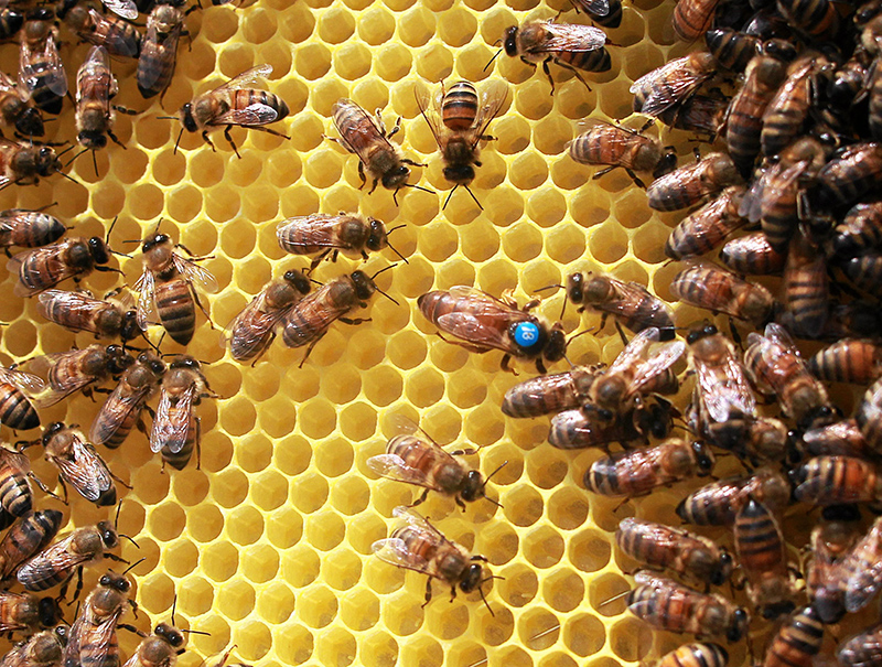 Pszczoły w ulach na dachu budynku Agory, fot. Przemek Wierzchowski / Agencja Gazeta