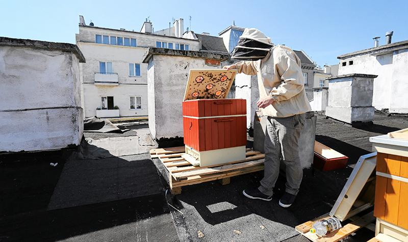 Hodowla pszczół na dachu kamienicy, ulica Wilcza, Warszawa, fot. Franciszek Mazur / Agencja Gazeta