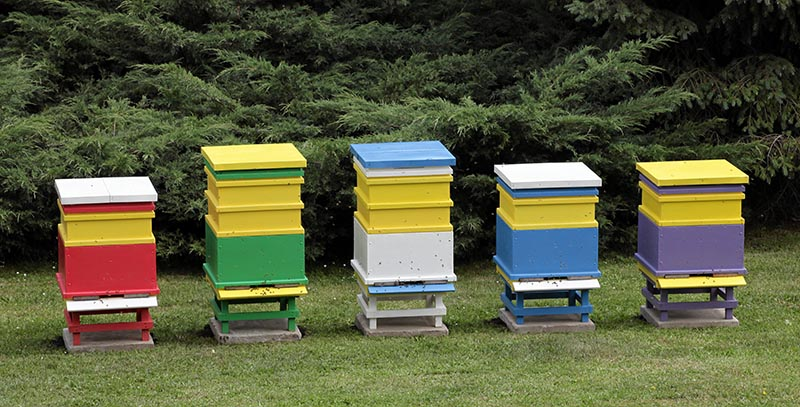 Na terenach sejmu RP w Warszawie w ogrodach senackich ustawiono 10 kolorowych uli, fot. Sławomir Kamiński / Agencja Gazeta