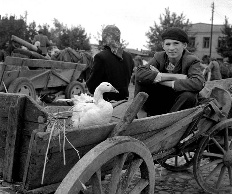 Targ Koński w Płocku, 1959, fot. Eustachy Kossakowski / Forum