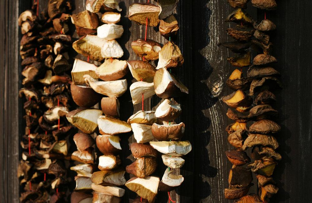Polish Food 101 ‒ Mushrooms | Article | Culture pl