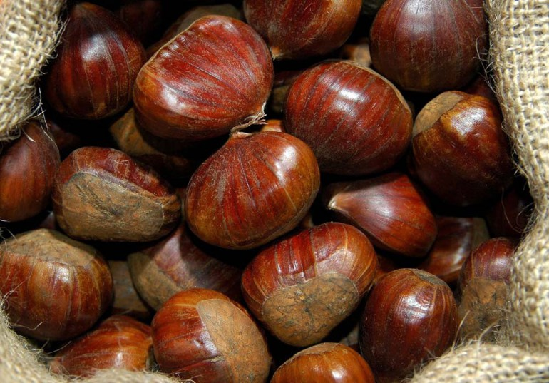 Eadible chestnuts, photo: Dariusz Lewandowski / East News