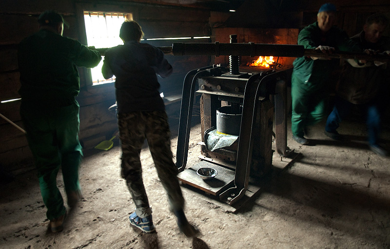 Białystok, linseed oil being made, photo: Michał Kość/Reporter/East News