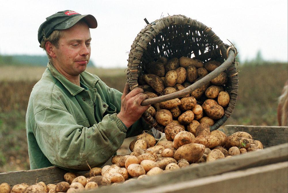 Фермер высыпает картофель. Фото: Лукаш Гловала/Forum
