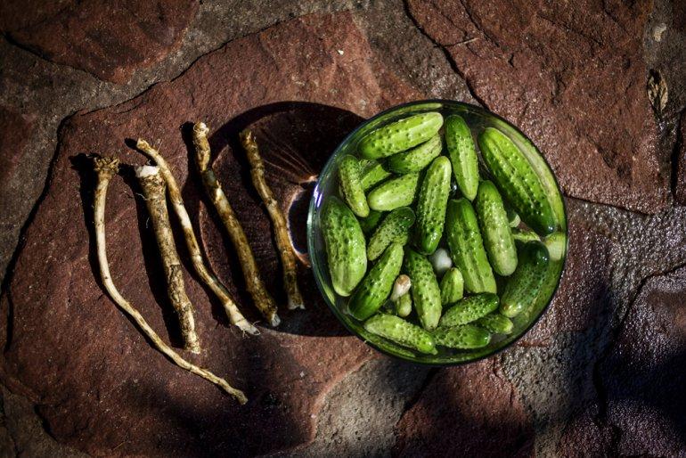 Cucumbers and horseradish, photo Grażyna Makara