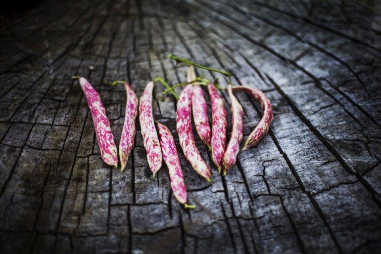 Cranberry beans, photo Grażyna Makara