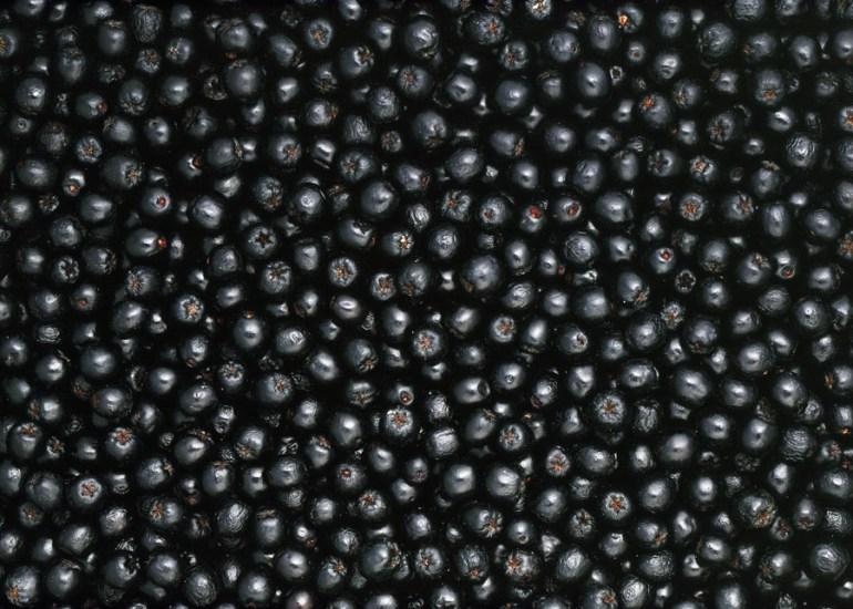 Aronia berries, photo: Woody Ochnio / Forum