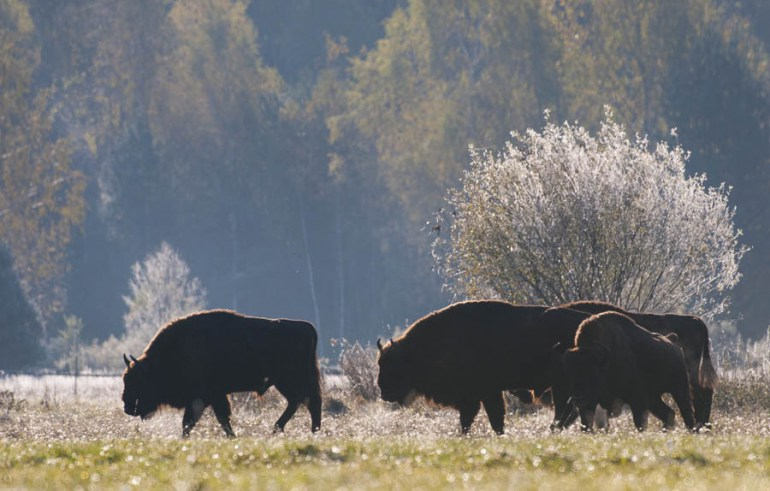 Białowieża National Park, photo: Marek Kosinski  / Forum