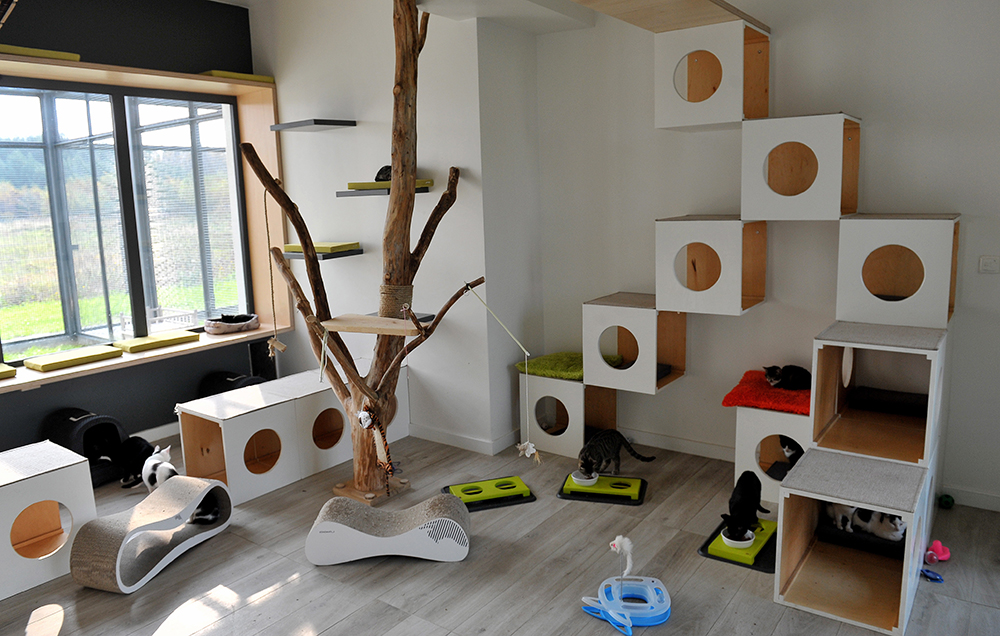 Cat House in Dobra, photo: Marcin Bielecki/PAP