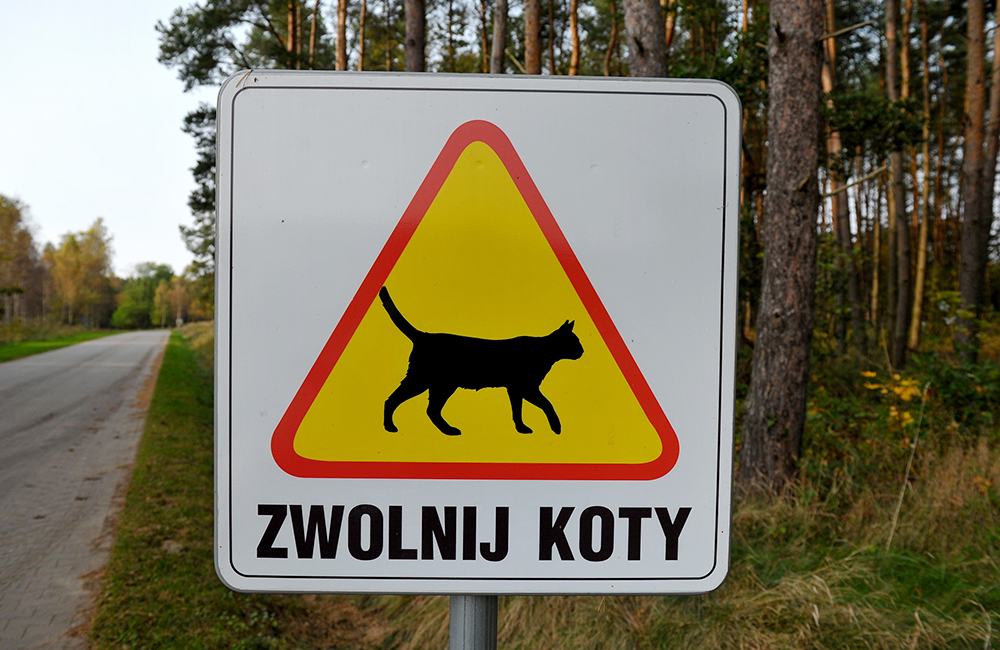 A road sign near the village of Dobra, photo: Marcin Bielecki / PAP