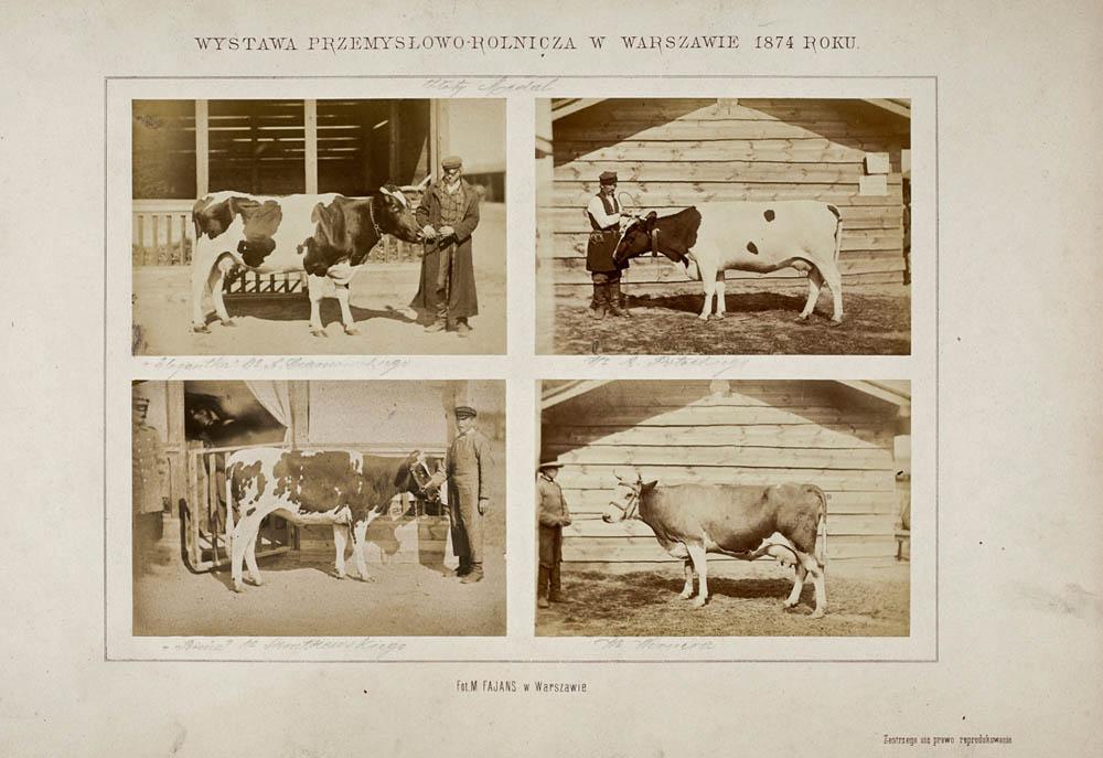 Warszawa. Pokaz zwierząt nagrodzonych na Wystawie Przemysłowo–Rolniczej, 1874. Zbiory: Muzeum Narodowe w Warszawie