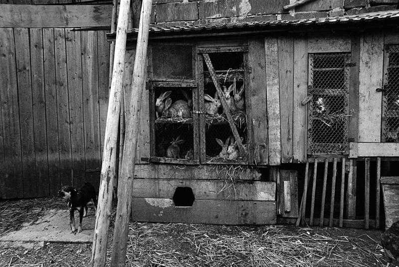 """Zofia Rydet, fotografia z cyklu """"Zapis socjologiczny"""", 1978-1990. Region: poznańskie, miejscowość: Santokot, fot. z kolekcji Fundacji im. Zofii Rydet"""