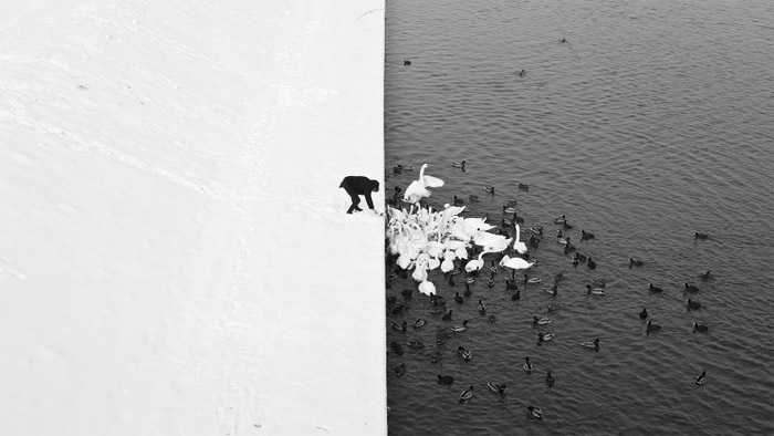 A Man Feeding Swans in the Snow by Marcin Ryczek, photo: courtesy of the artist