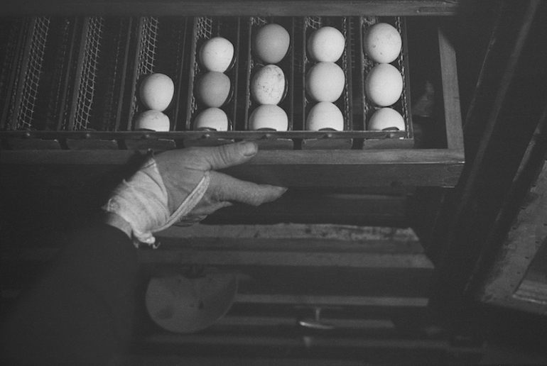 Drawer of freshly farmed eggs, Gut Winkel, a training farm for German--‐Jewish youth hoping to emigrate to Palestine, Spreenhagen in der Mark, Brandenburg, Germany], ca. 1938. ©Mara Vishniac Kohn, courtesy International Center of Photography.
