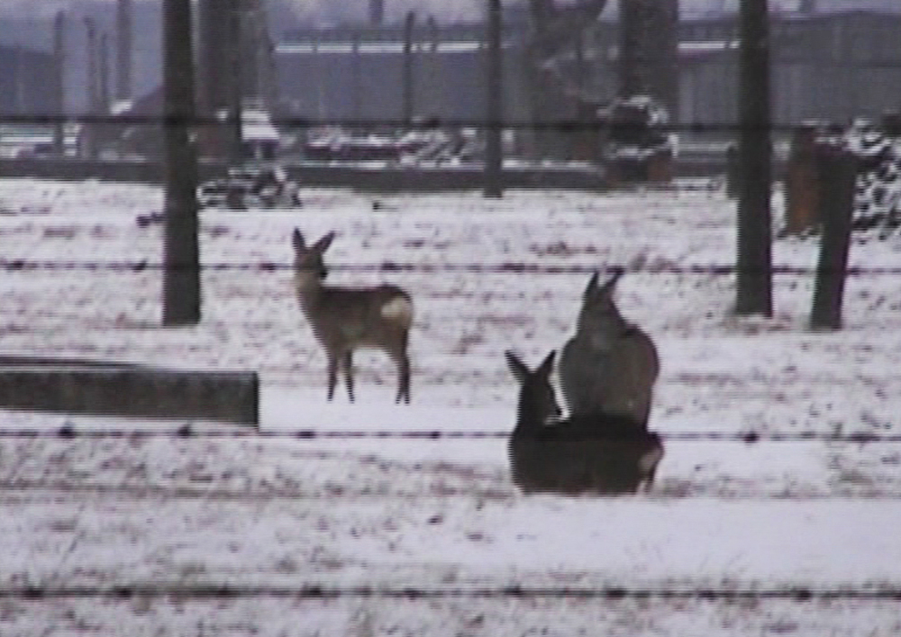 """Bambi"", 2003, fragment of video-installation ""Winterreise"". Copyright of the artist, courtesy of the Gladstone Gallery, New York"