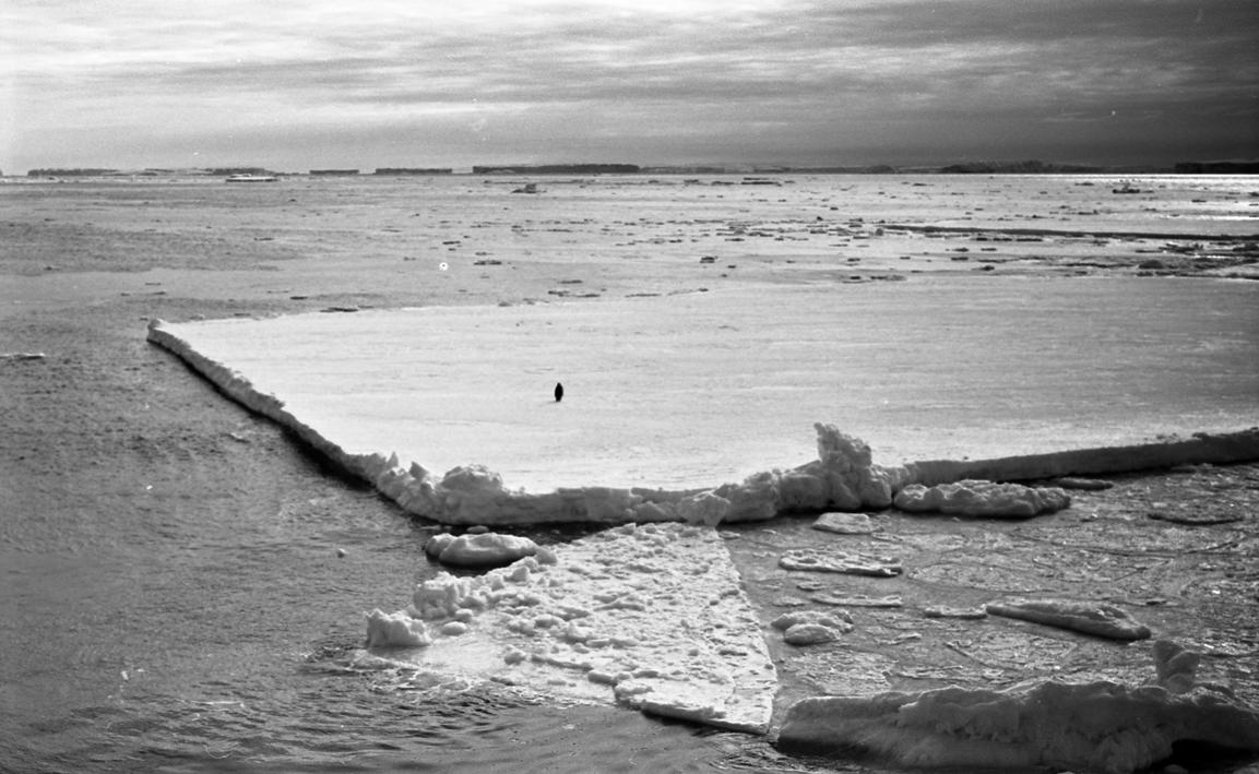 Кадр из фильма Анны Мольской «Шестой континент», фото предоставлено автором