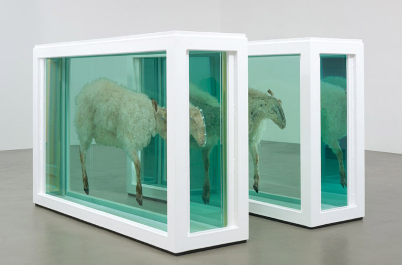 "Damien Hirst, ""Away from the Flock (Divided)"", detal, 1995, fot. Prudence Cuming Associates, Copyright Damien Hirst i Science Ltd. Wszystkie prawa zastrzeżone DACS 2013"