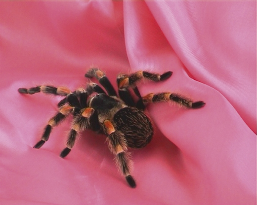 Arachne, installation at Neuer Berliner Kunstverein and video, 2003