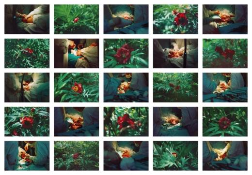 Life is Beautiful / Życie jest piękne (part 1), colour photograph – 25 photographs, 2002