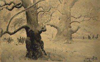 Dęby rogalińskie, 1915, papier, tusz, fot. T. Żółtowska-Huszcza w zbiorach Muzeum Narodowego w Warszawie