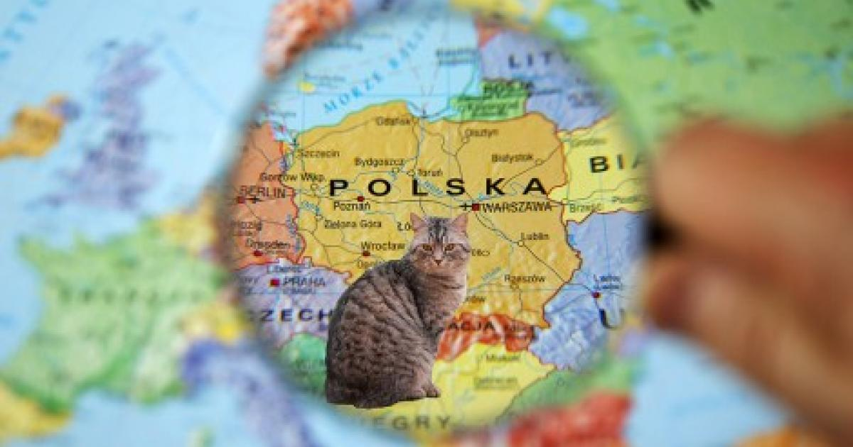 A Cat Map of Poland | Article | Culture.pl Ultimate Dx World Map on dr world map, ea world map, di world map, er world map, gb world map, sport world map, br world map, co world map, hybrid world map, ar world map, bd world map, sl world map, al world map, fx world map, sr world map, ca world map, cn world map, sc world map, hp world map,
