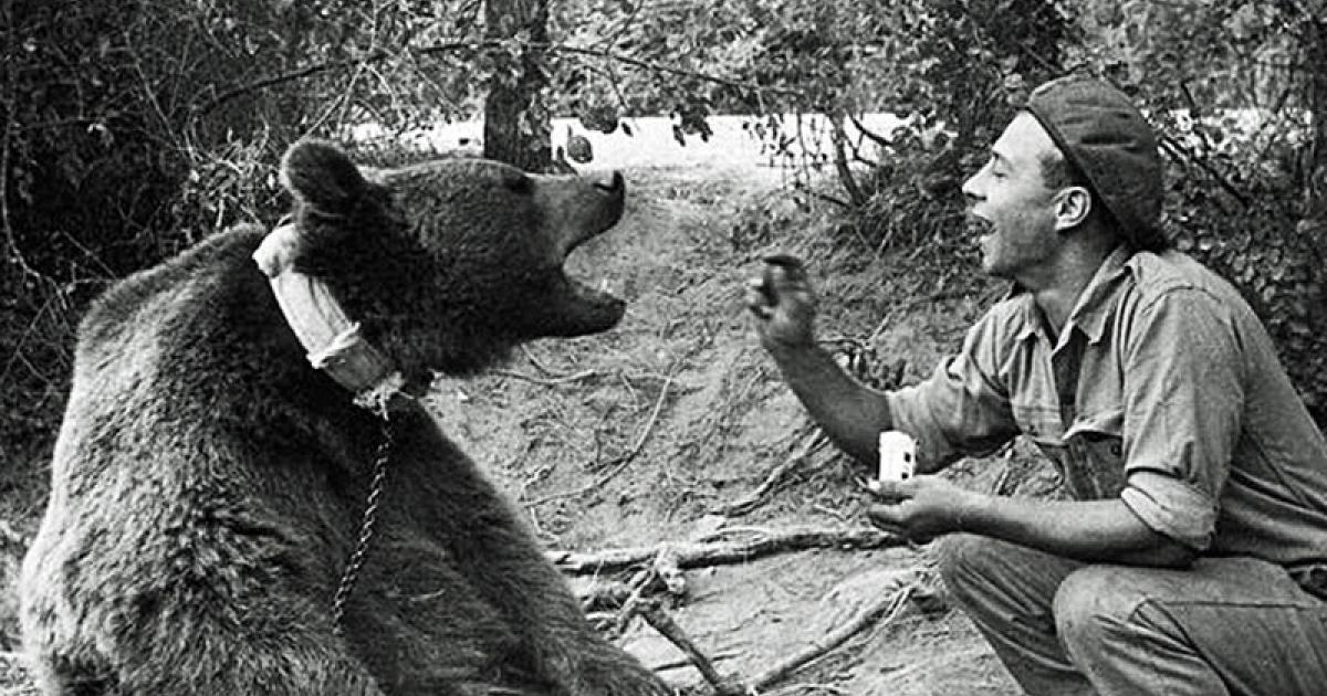 Wojtek - The Bear That Went To War - Image gallery ...