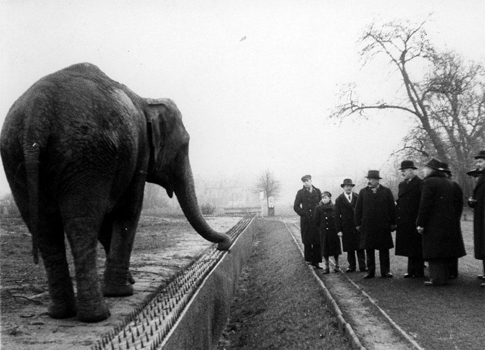 Znalezione obrazy dla zapytania o zwierzętach i ludziach