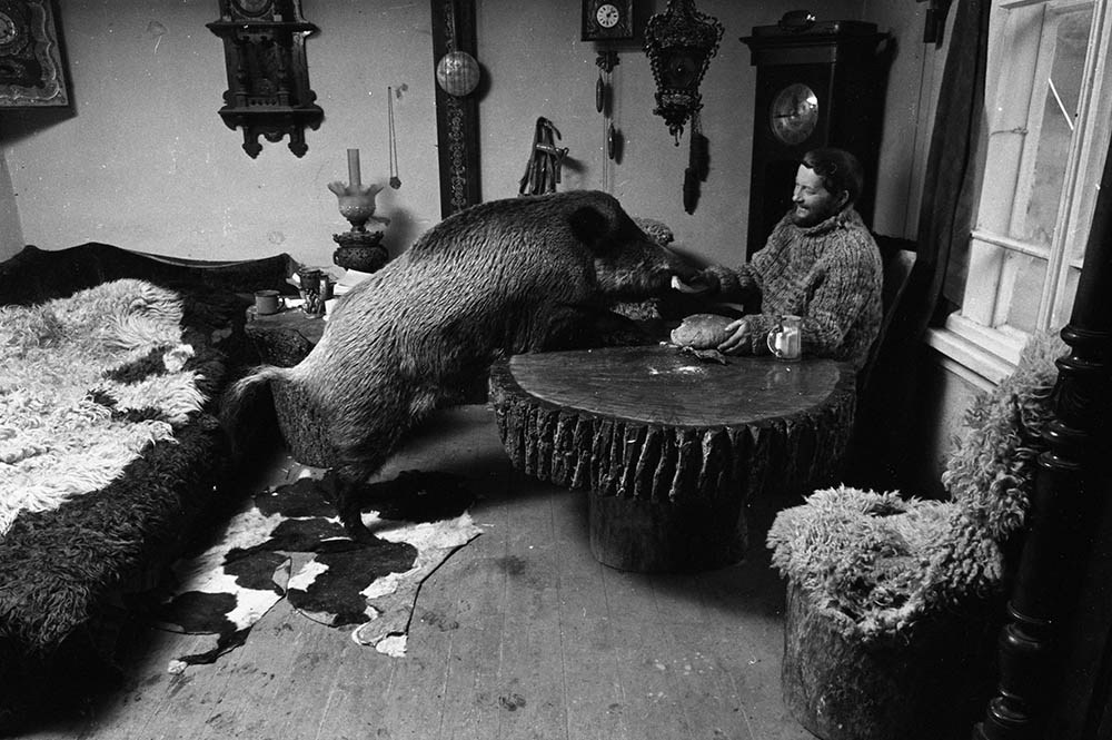 Leszek Wilczek z dzikiem Żabcią podczas śniadania, 1975, fot. Maciej Musiał