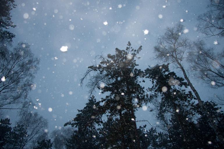 Polish forest in Tatra Mountains, photo: CC / Flickr.com / user: Magic Madzik